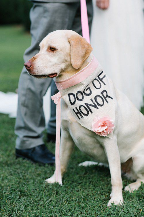 including your pets in our cremony dog of honour