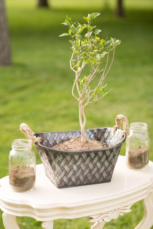photo of a tree in a pot sitting on a table for the symbolic ritual of tree planting with the celebrant angel