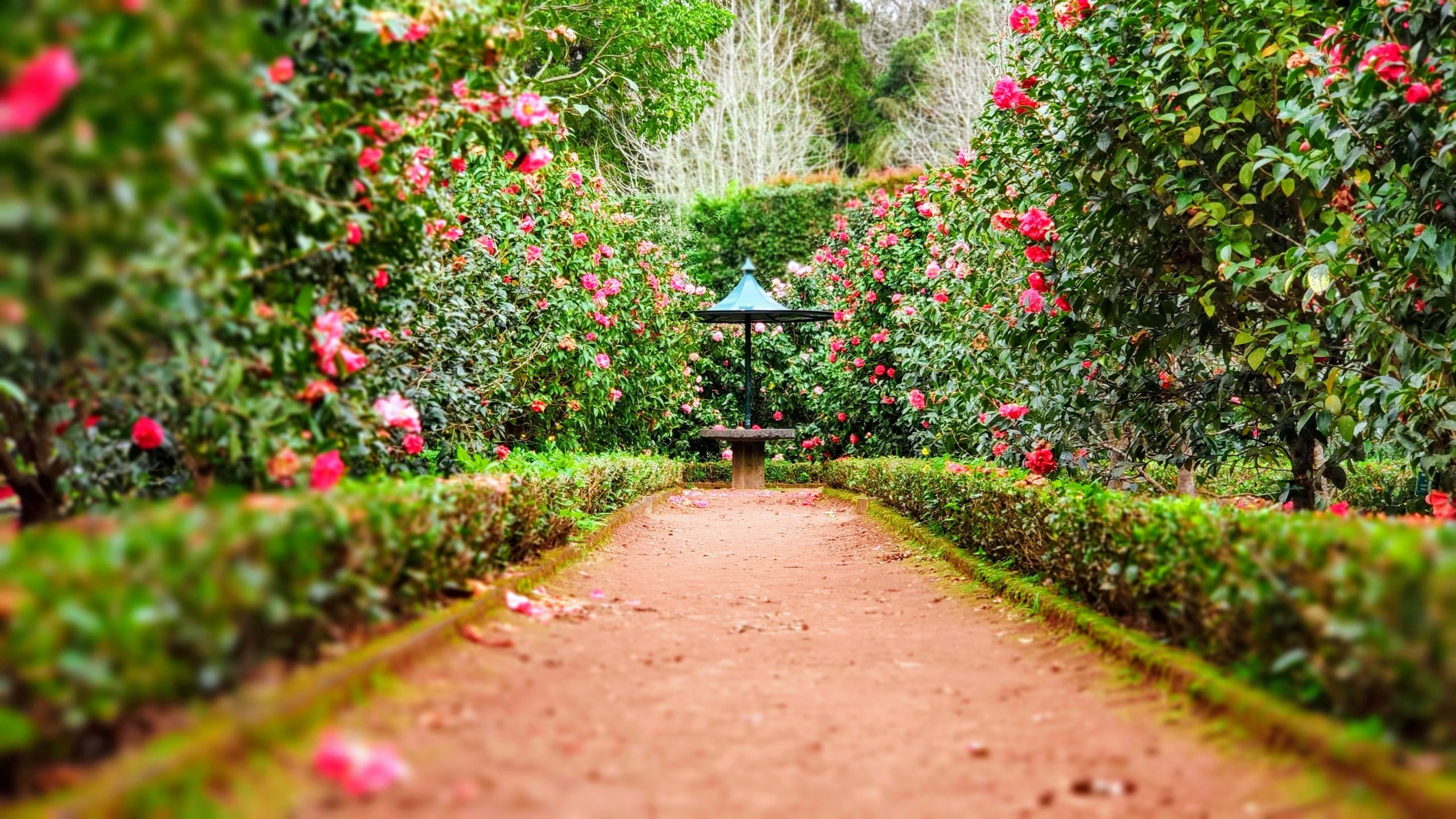 garden path with wild flowers on each side family and naming ceremonies in aberdeen